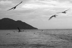 Storm-birds at Ninh Van bay.