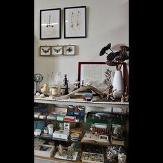 48=SHI-BAさんの、剥製,理系,理系雑貨,理科系,アンティーク,ビンテージ,標本,昆虫標本,雑貨,植物標本,流木,顕微鏡,ドライフラワー,ガラスキャビネット,のお部屋写真