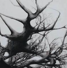 Tree - Declination XIII
