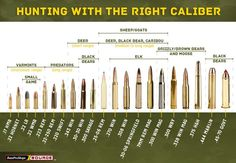 How to Choose the Right Rifle Ammo for Hunting