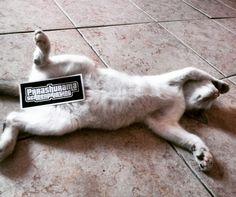 Kucing Sleeping cat
