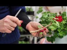 YouTube Flower Garden, Flowers, Garten, Mini Garden, Planting Herbs, Jardin, Plants, Herbs, Home And Garden