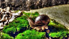 Snail by Vencislav Stanchev on 500px