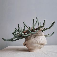 Ceramics with Euphorbia Mammillaris variegata   Zhu Ohmu