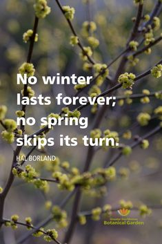 Spring garden gardening nature blooms witchhazel botanicalgarden quotes gardenquote we all need a little nourishment to grow! design by fresh picked whimsy gardening quotes inspirational Gardening For Beginners, Gardening Tips, Hydroponic Gardening, Container Gardening, Nature Quotes, Life Quotes, Healing Words, Love Truths, Garden Quotes