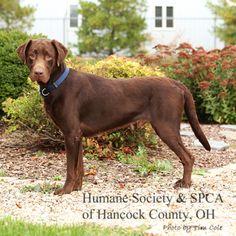 Findlay Humane Society Dog Adoptions