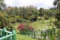 San Juan Botanical Gardens Puerto Rico, Puerto Rican Dishes, Beautiful Streets, Natural Wonders, Garden Bridge, Botanical Gardens, Around The Worlds, Outdoor Structures, Plants