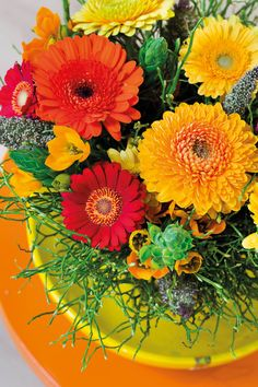 Close-up of gerberas #orangegerberas #redgerberas #inspiration #colouredbygerbera #dutchgerbera