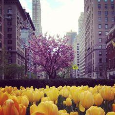 Spring in NYC...Park Avenue