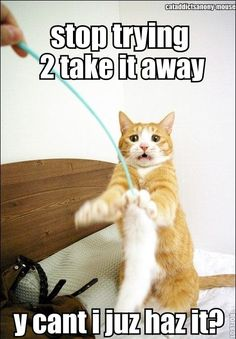 Cat struggles to catch the feather toy. // funny cat memes