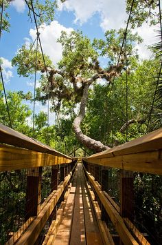 Along the Canopy Walkway at Myakka State Park in Sarasota, Florida