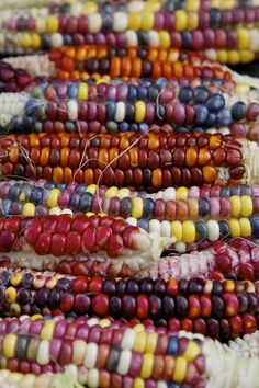 Painted Mountain Corn by cskk Rainbow Corn, Rainbow Fruit, Fruit And Veg, Fruits And Vegetables, Glass Gem Corn, Corn Maize, Good Roasts, Bountiful Harvest, Mountain Paintings