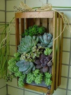 vertical succulent planter--I have an old soda crate. This would be awesome.