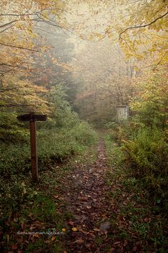 Hiking path at Dolly Sods, Randolph County, West Virginia