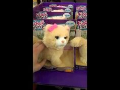 This Toy Cat is the Stuff of Nightmares!!!