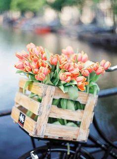 Tulipanes en cajón.