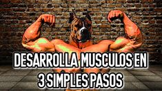 MÉTODO VERDADERO para que TU PERRO GANE MUSCULO en 3 FÁCILES PASOS. 💪 Movie Posters, Movies, Muscle Up, Muscle Mass, Dog Breeds, Pets, Films, Film, Movie