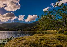 Summer sunset__Norway by Rune Hansen on Tree Mushrooms, Summer Sunset, Bergen, That Way, Norway, River, Mountains, Landscape, Nature