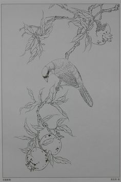 Japan Painting, Silk Painting, Botanical Drawings, Botanical Art, Bird Artwork, China Art, Black And White Drawing, Bird Illustration, Bird Drawings