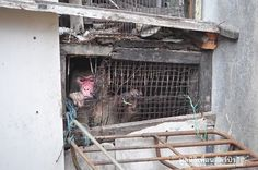 Monkey Was Trapped Between Two Buildings For 25 Years