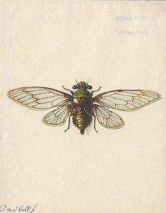 cute lil bug tattoo