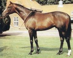 Critique(1978)Roberto- Cambrienne By Sicambre. 4x5 To Tourbillon, 5x5 To Blue Larkspur & Nearco. Won Hardwicke S(G2), Cumberland Lodge S(G2). Sire In Brazil.