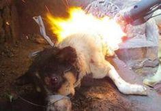 Animal Cruelty in China
