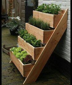 Comente o que achou dessa horta. . . 👇Siga nossos Parceiro