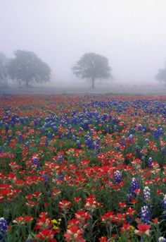 Even on a foggy day...their colors shine through.