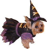 Witch Pet Costume---The Top Pet Costumes for #Halloween http://poshonabudget.com/2014/09/the-top-pet-costumes-for-halloween.html via @poshonabudget