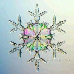 Snow Flake !