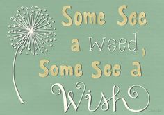 Some see a weed, some see a wish. | chrystalizabeth