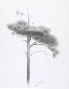 Concept Art, Scotch Pine, Brave, 2012
