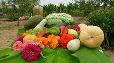 Cuando sembrar y cosechar en tu huerta jardin