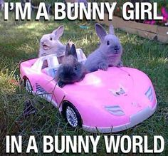 """""""Come on bunny let's go party"""""""