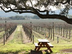 Hill Country's hidden-gem wineries and what to drink when you visit