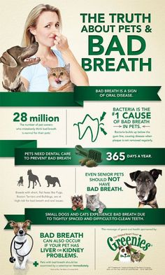 Dog bad breath causes. Learn about it