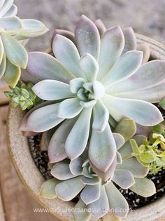 Learn what succulents are and what you can do with succulents