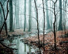 Surreal fog nature photography . once upon a time .  woodland tree art featured in Golden Globes gift lounge . Winding Creek. $28.00, via Etsy.