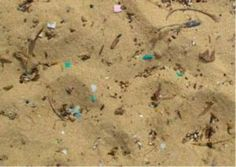 """Microplastics Make Marine Worms Sick-Tiny bits of plastic trash could spell big trouble for marine life, starting with the worms...Those marine worms play a key ecological role as an important source of food for other animals..."""
