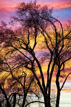 A beautiful always changing colorful sunset sky with silhouetted trees lit with white Christmas lights. Photography Image 13 in this series. Fine art nature landscape photography prints, canvas art and stock images by James Bo Inosgna. Beautiful Sunset, Beautiful World, Beautiful Places, Trees Beautiful, Amazing Sunsets, Amazing Nature, Dame Nature, Sunset Sky, Sunrise