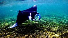 Manta Poin Komodo, Whale, Animals, Animales, Animaux, Whales, Animal Memes, Animal, Animais