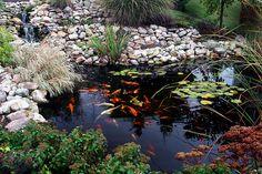Have my water garden look this good