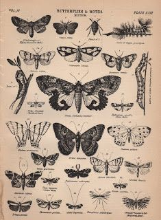 Application Package | Love the monochromatic palette. Victorian Butterfly Graphics - The Graphics Fairy