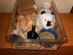 Guinea Pig Care Sensory Tub ~ Play 2 Grow