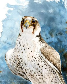 Lanner Falcon Study  Watercolor Painting by featherdust on Etsy, $300.00