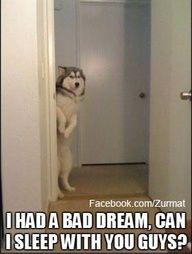 Adorable dog!!