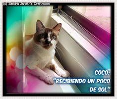 Gato, Coco
