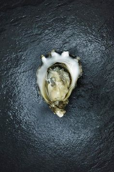The Mexican Oyster That Could Change the Whole Game Rachel Tepper  Rachel Tepper  Associate Food Editor  Apr 1, 2014