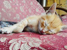 Sleep..